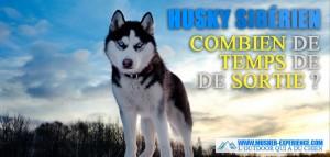 combien de temps de sortie ou de sport a besoin un husky musher experience l 39 outdoor canin. Black Bedroom Furniture Sets. Home Design Ideas