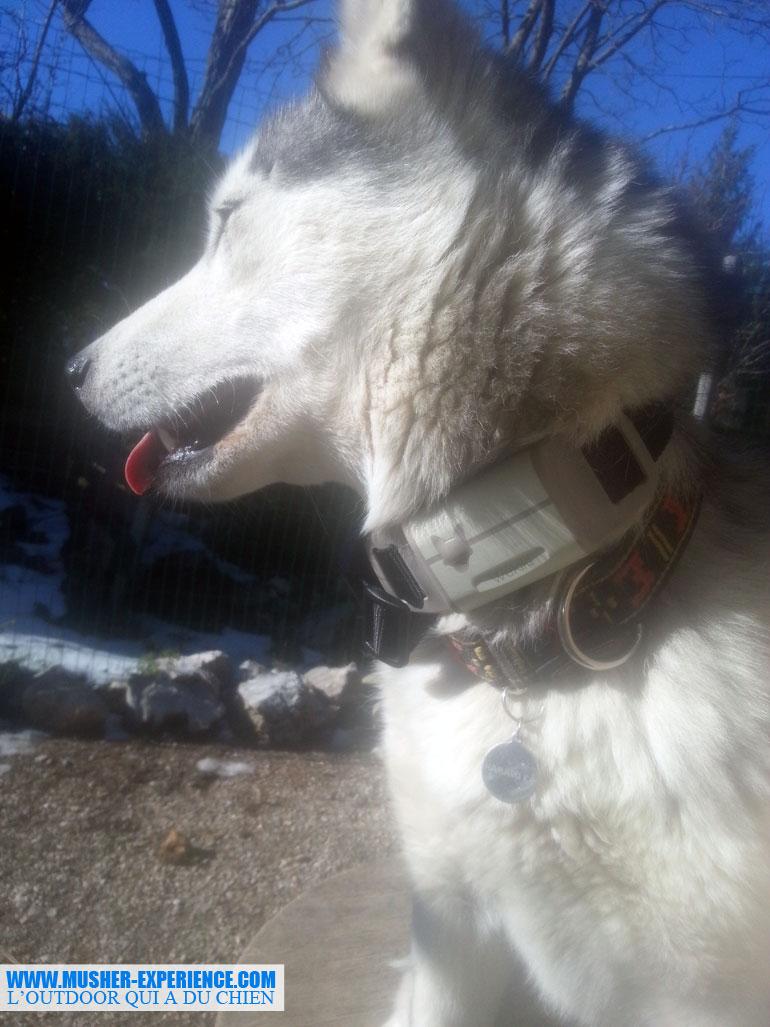 En cas de fugue, je pourrais géolocalisée mon husky grâce à Wekiki