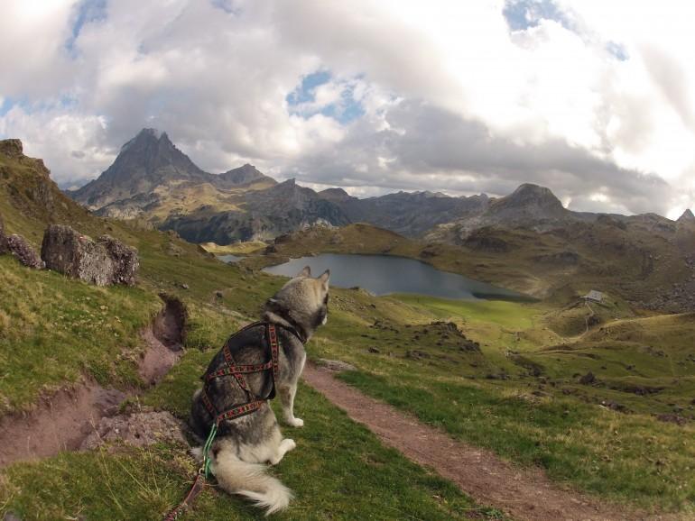 Mon husky admire le lac - harnais xback manmat
