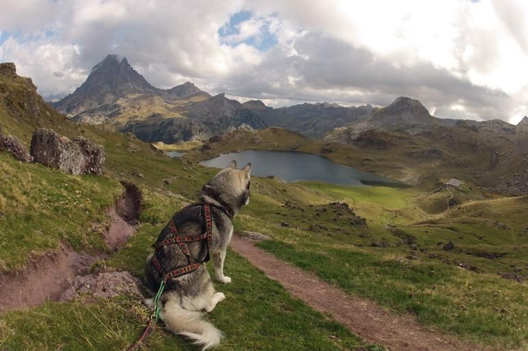 Cani rando - randonnée avec son chien