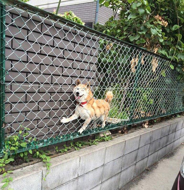 chien-mauvaise-decision-14