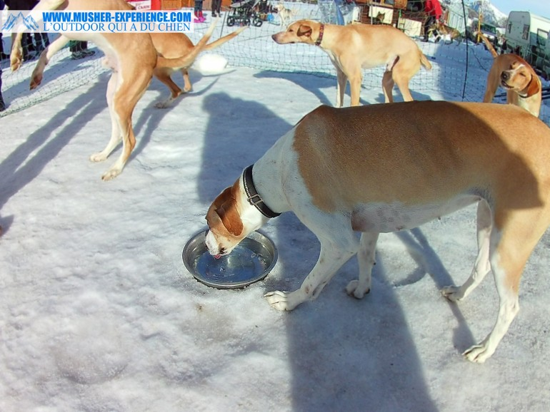 eurohound remy coste