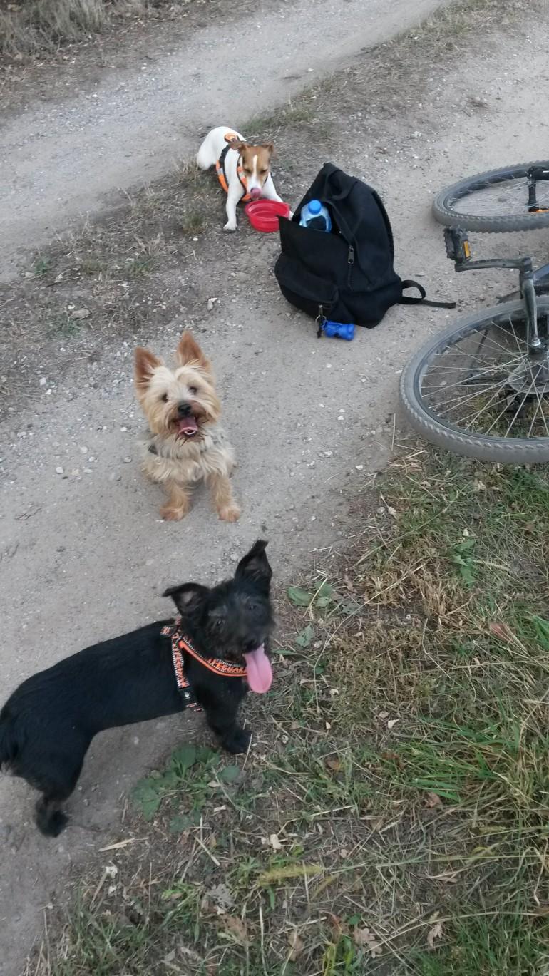 randonnée vélo avec son chien