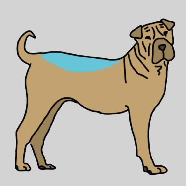 massage-chien-sante-3