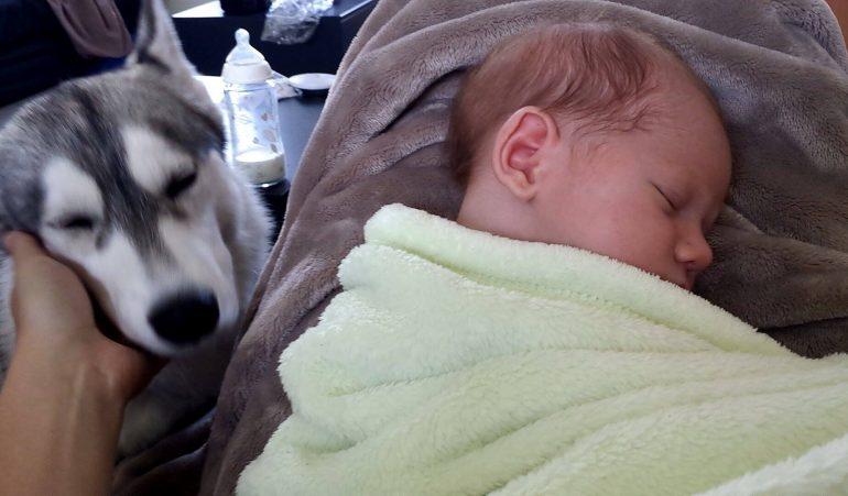 rencontre chien et bébé