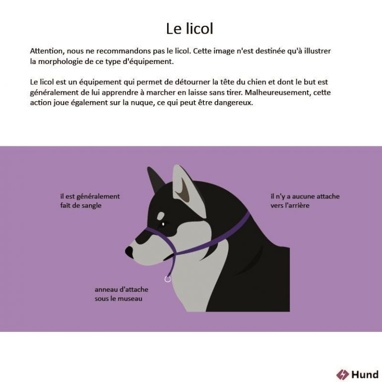 licol halti - harnais anti traction - source photo : Maginea.com et Hund.fr