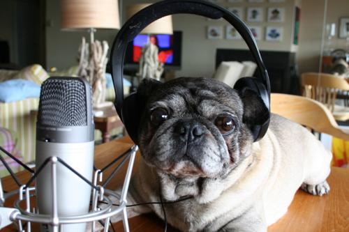 podcast-audio-chien