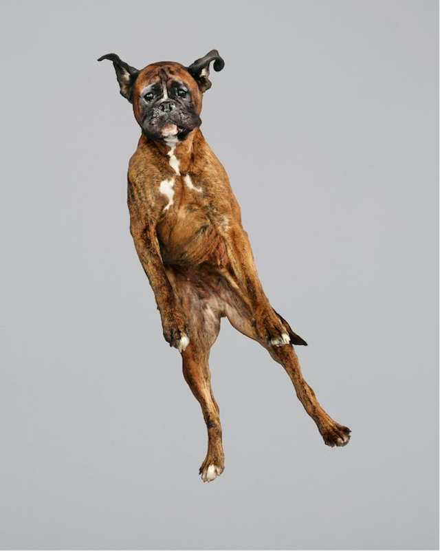funny-jumping-dogs-series-10