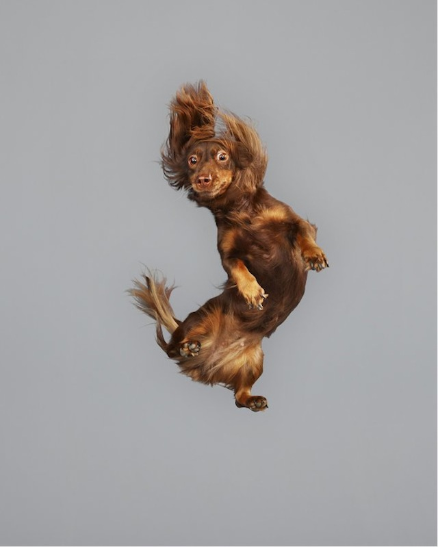 funny-jumping-dogs-series-11