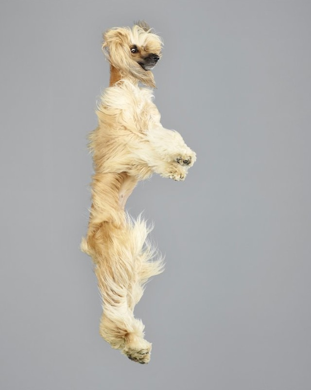 funny-jumping-dogs-series-14