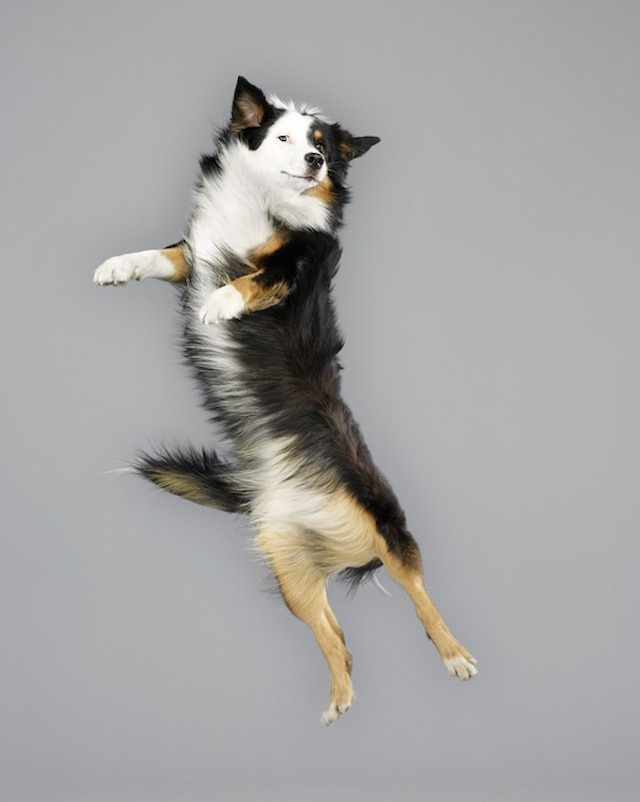 funny-jumping-dogs-series-17
