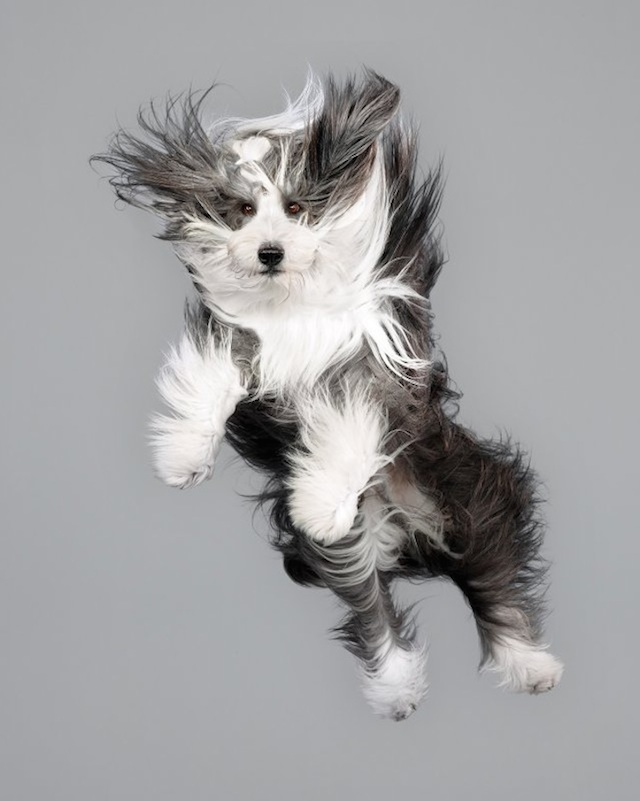 funny-jumping-dogs-series-2