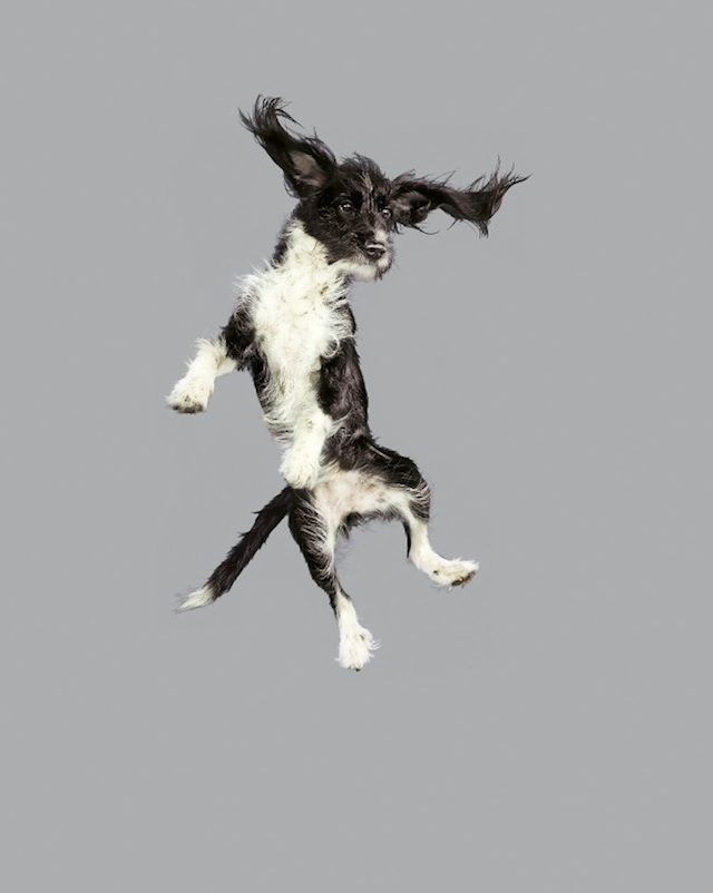 funny-jumping-dogs-series-5