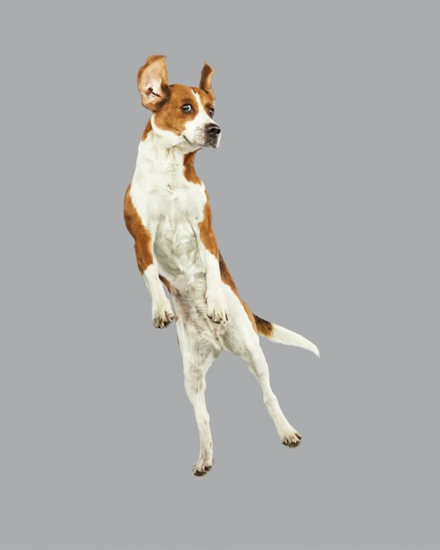 funny-jumping-dogs-series-7