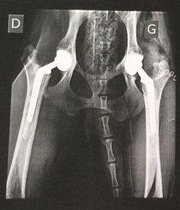 Radio de la dysplasie de la hanche chez le chien Allspark