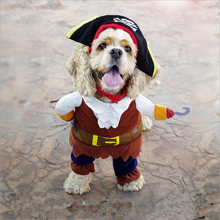 costume-chien-pirate-deguisement