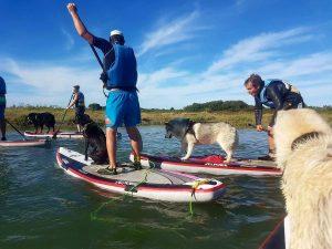 cani paddle: du paddle avec son chien activité l'été