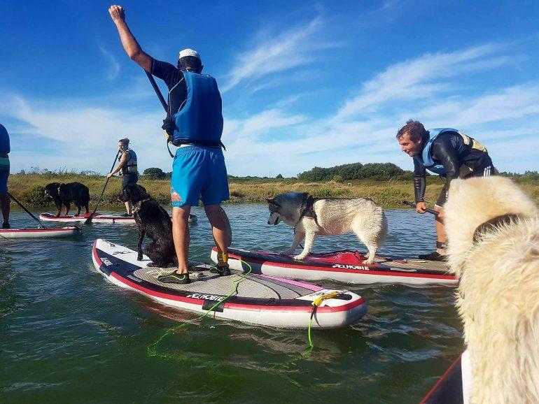 paddle board chien husky rivière