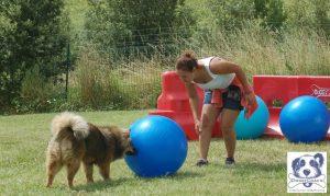 treibball activite avec son chien