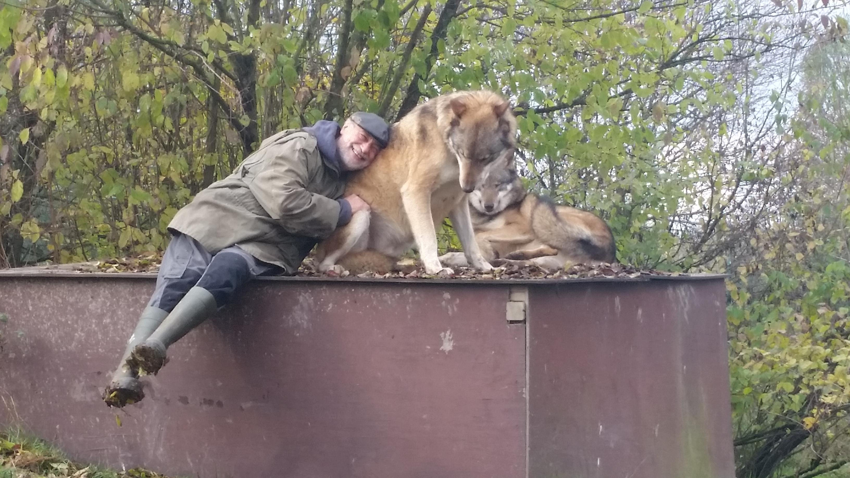 Un calin avec des loups