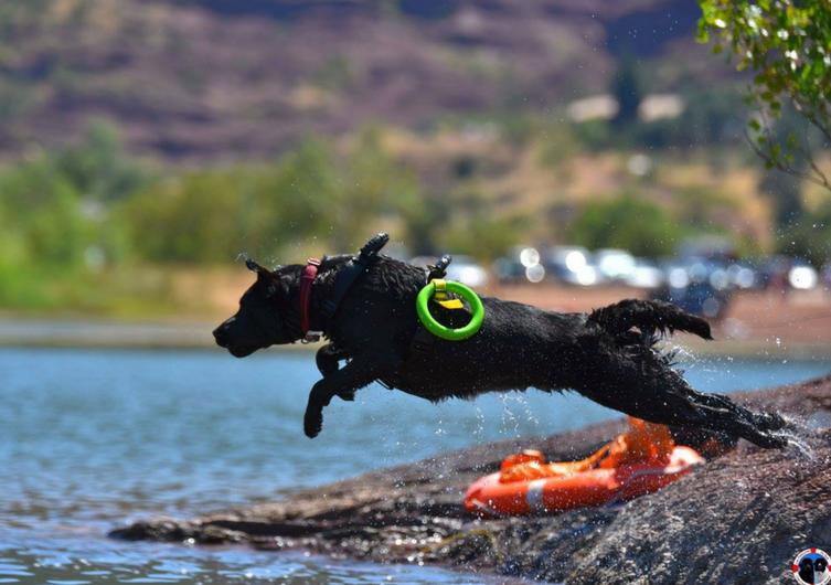 Sauvetage à l'eau: activité pour chien