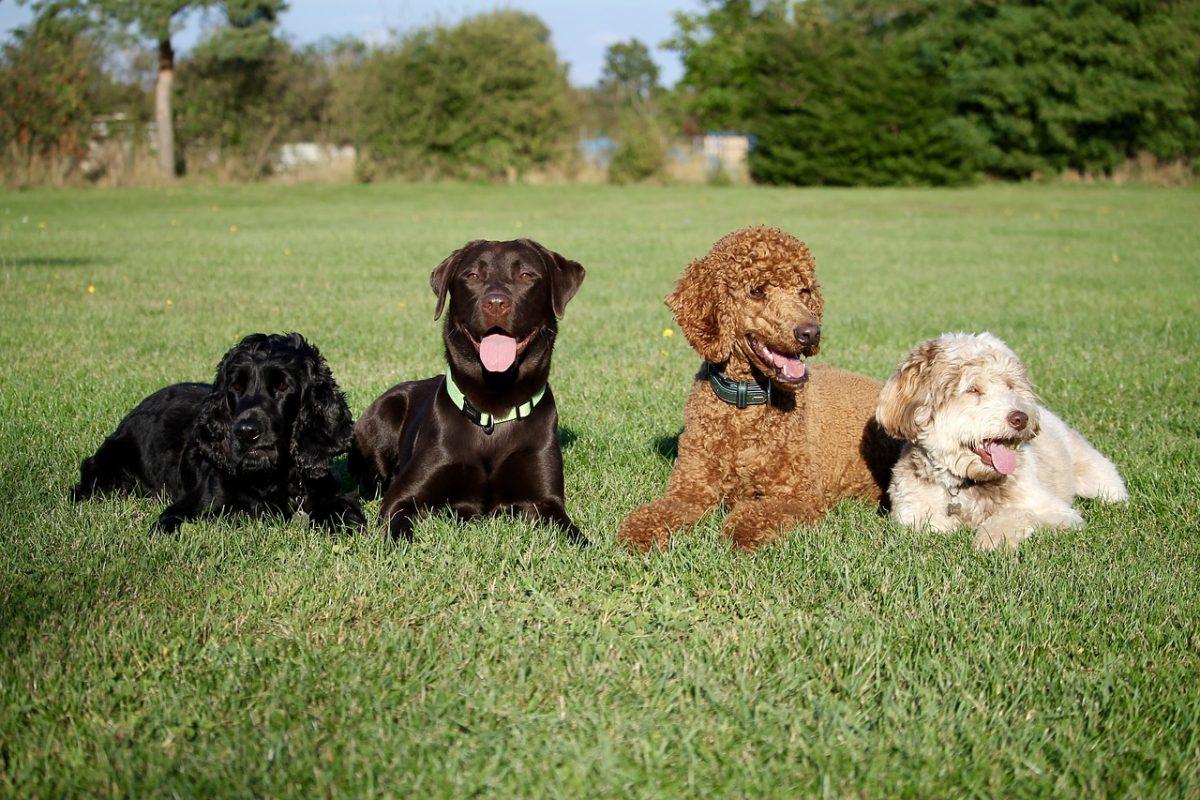 activité avec chien obéissance