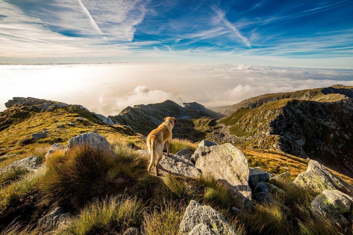 Activite avec son chien liste activite sportive avec son chien