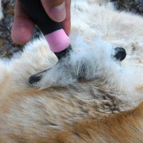 Brosse pour husky: meilleure brosse pour chien