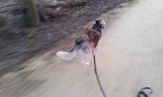 Harnais xback Manmat et ligne de trait en canivtt - crédit photo: Nuttah Fish On
