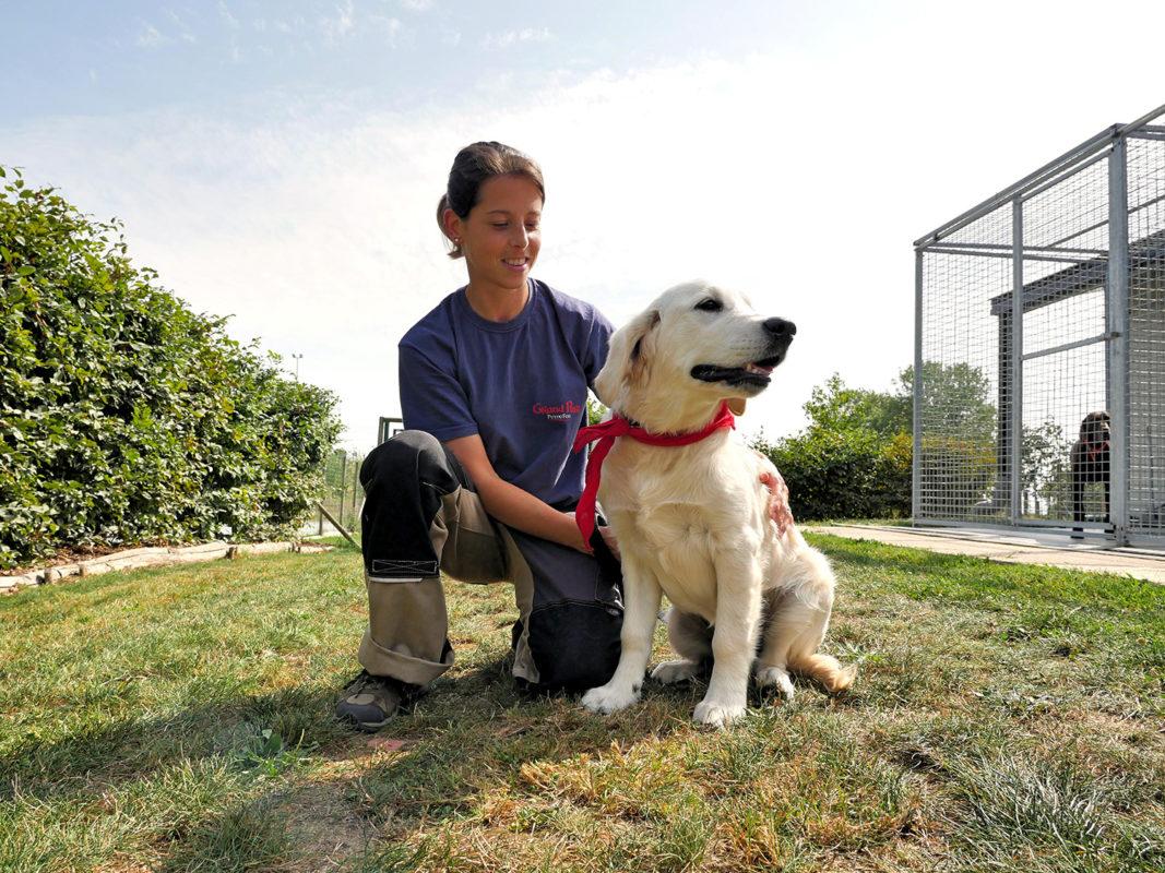 Pension canine au Puy du Fou - test et avis