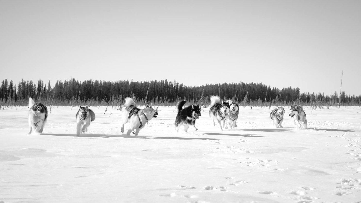 chien neige Arnaud Camel