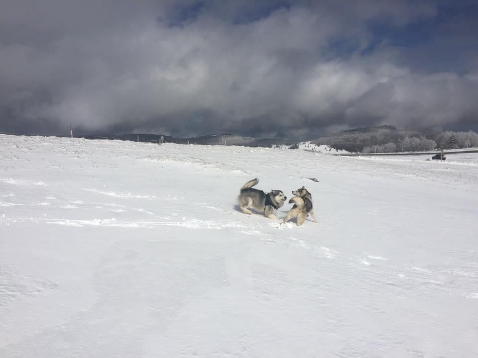 chien neige Aude Couëdic