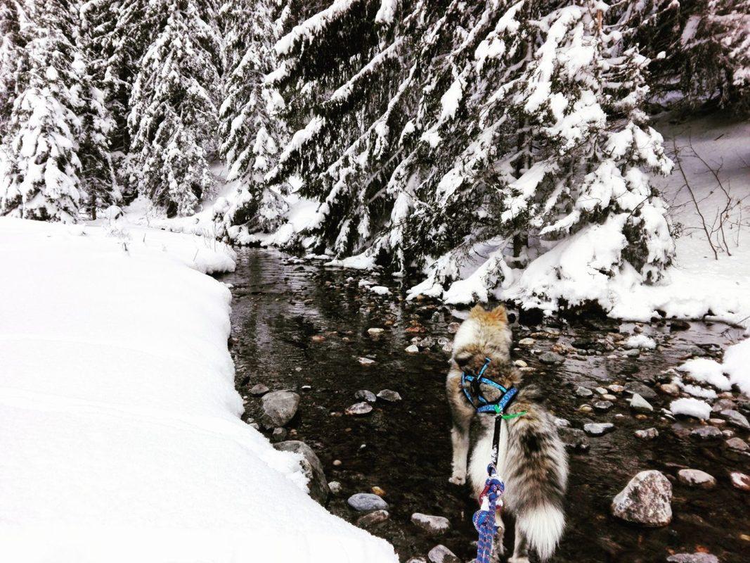 Canirando dans la neige Emmanuelle Martin-Delcombel