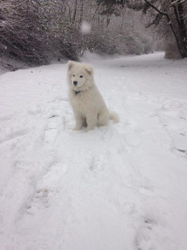 Chiot neige Paola Fenaille