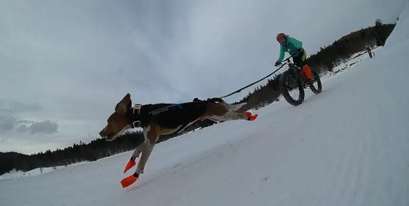chien neige fatbike sur neige Leo Whippet