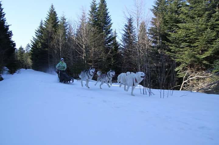 chien neige traineau à chiens 3 husky Audrey Lousky