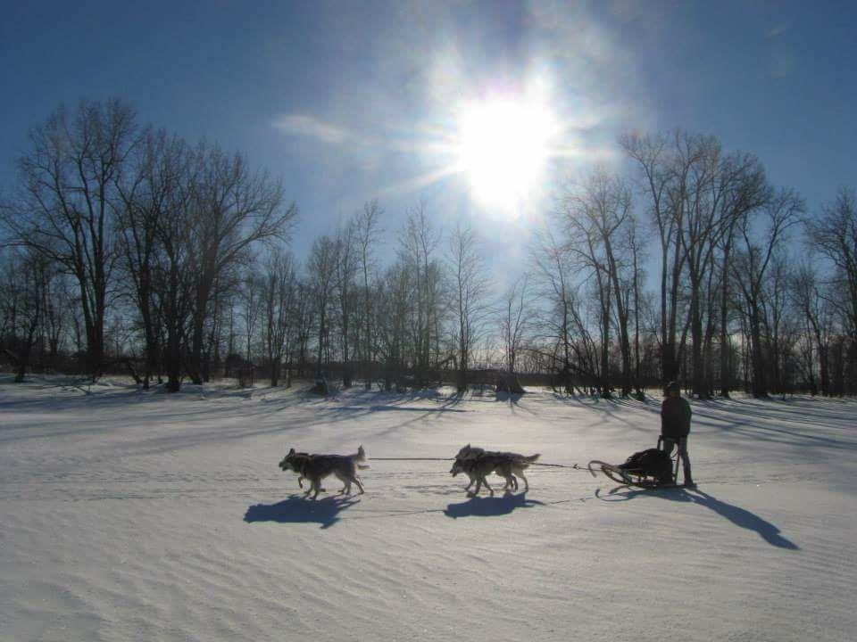 chien neige traineau à chiens 4 chiens Daniel Vallieres