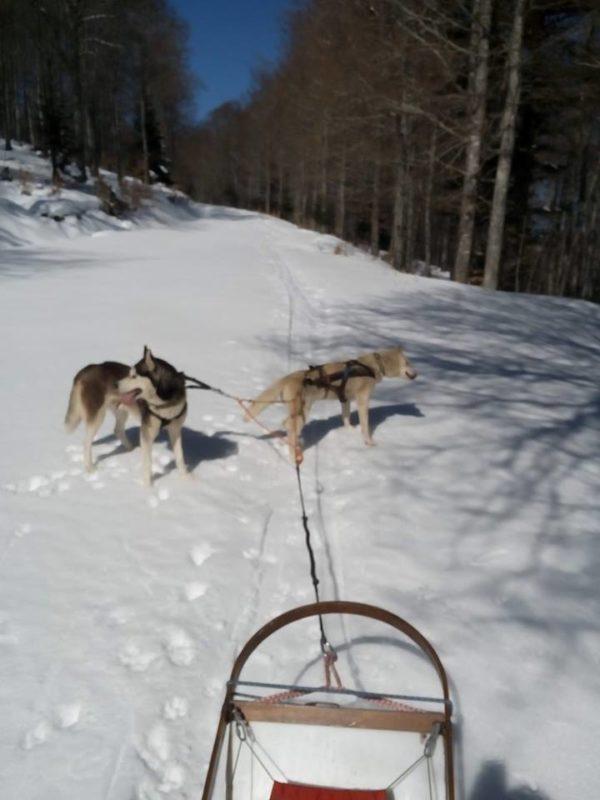 chien neige traineau à chiens Alexandre Berlhe