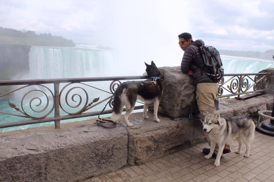 Husky sibérien avec laisse Manmat et collier Manmat