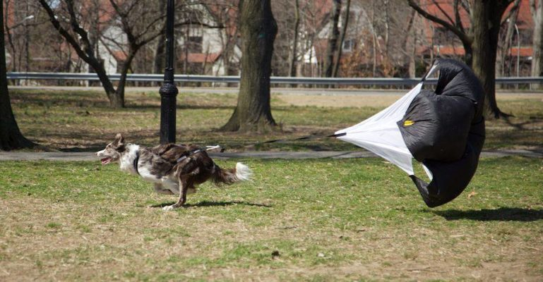 Parachute de course pour chien - speed chute