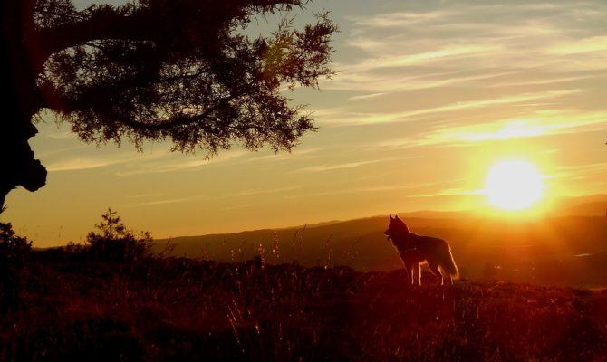 4 piliers fondamentaux pour être performant en sport canin canivtt, canicross, attelage