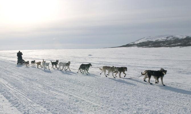 11 Commandements mushers