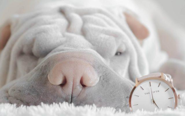 chien qui dort