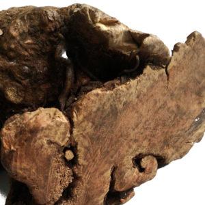 friandise naturelle pour chien racine d'arbre a macher