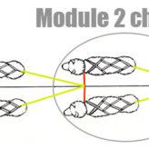 ligne de trait module 2 chiens – attelage chien