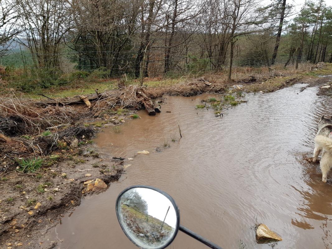 attelage canin quad flaque de boue enorme