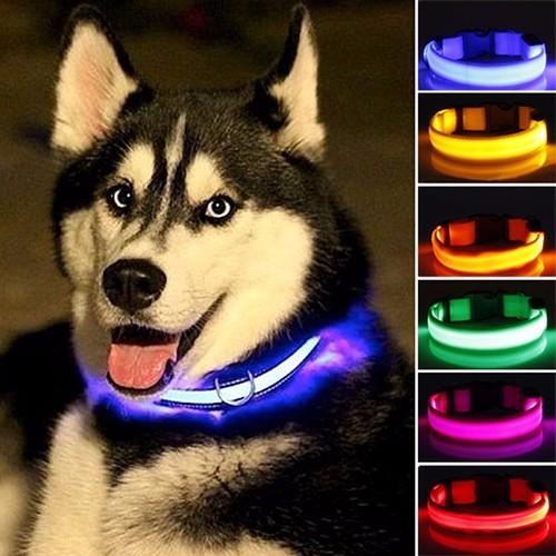 collier lumineux pour husky siberien avis temoignage