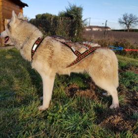 guide taille harnais xback chien husky siberien profil
