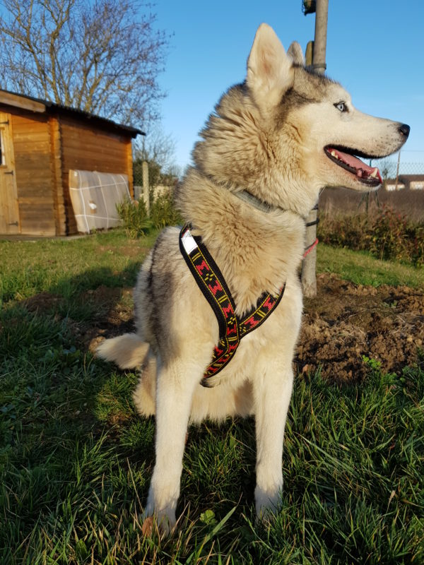 guide taille harnais xback trop grand chien husky siberien poitrine