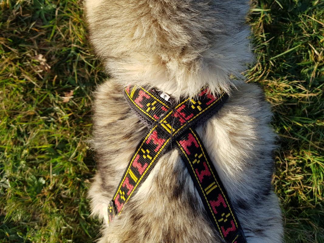 guide taille harnais xback trop petit chien husky siberien collier epaules avant